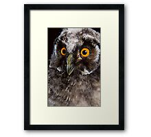 Portrait of an owl Framed Print