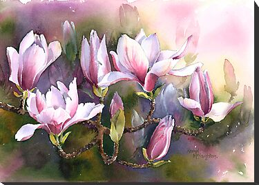 Magnolia Bough by artbyrachel