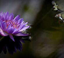 Serene Beauty by Maska