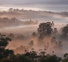 """'Apricot Mist"""" by debsphotos"""