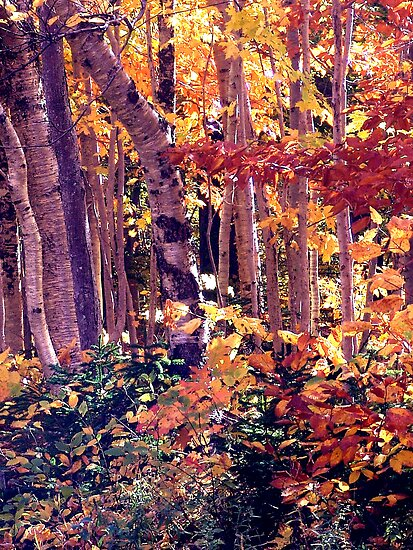 The Woods are Ablaze by George Cousins