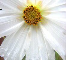 White Angel by kimauman