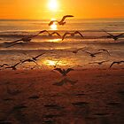 Sea Gulls by Walt Conklin