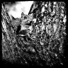 Squirrely by Trish Mistric