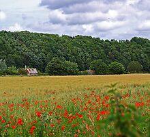 Poppy Fields of the Tweed Valley by Ryan Davison Crisp