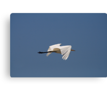 Graceful in Flight Canvas Print