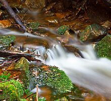 Dunns Creek at Fern Tree by Chris Cobern