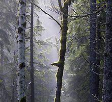 alder... by Allan  Erickson