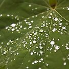 Dew Covered Leaf by psnoonan