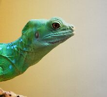Reptilian Color Gradient by Seventy8