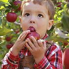 Apple Picking by Lana Howe