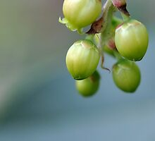 Tiny Green Tree Pods by chijude
