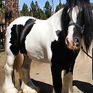 Saxon~Gypsy Draft Horse by NancyC