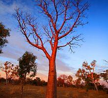 """Boab Sunset"" The Kimberley, Western Australia by wildimagenation"