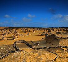 Desert Views, Nambung NP, WA by Malcolm Katon