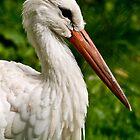 Stork by Sarah Jones