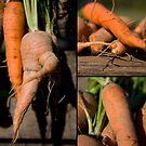 Carrots by Kasia Fiszer