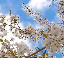 Spring Blossom by Sarah Jones