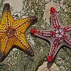 Stars From Bazaruto         Mozambique by BaZZuKa