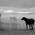 Dog on Misty Morning by Janet Young