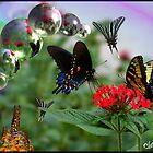Butterfly Social Club by Christina Sauber