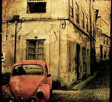 beetle coimbra - Portugal by Sonia de Macedo-Stewart