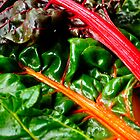 Rainbow Chard by Tiffany Dryburgh