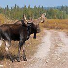 Moose by Gary Lengyel