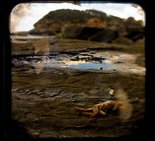 Terrigal by ADMarshall