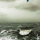 Intrepid Windsurfer by Roz McQuillan