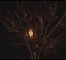 Full Moon through the Branches by Jan  Tribe
