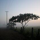 Foggy Morning by Jodie Bennett