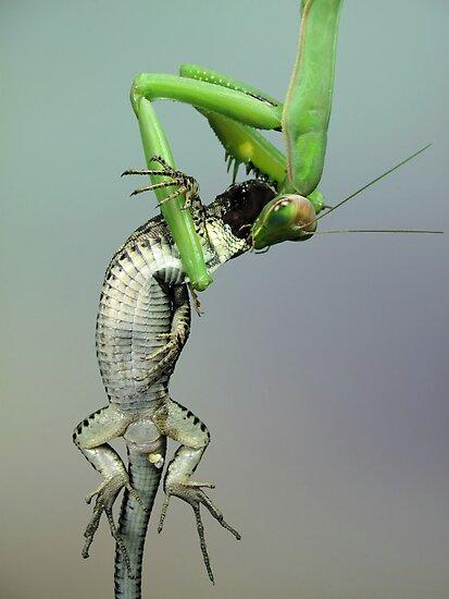 Predator becomes prey by jimmy hoffman