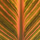 Canna Leaf by Bramble