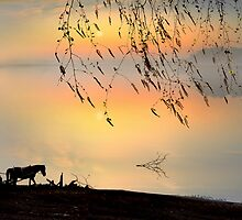 Country Silhouettes by Igor Zenin