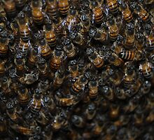 Busy Bees by laureenr