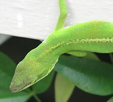 Native Green Anole by JeffeeArt4u
