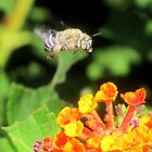 This Bee a Luck Shot! by Kimberly Chadwick