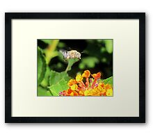 This Bee a Luck Shot! Framed Print