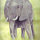 African Elephant by Maureen Sparling