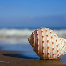 Seashell on the Seashore by Alex  Bramwell