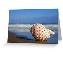 Seashell on the Seashore Greeting Card