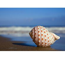 Seashell on the Seashore Photographic Print