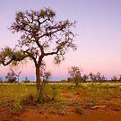 Windora Sunset by bettyb