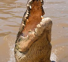 Saltwater Crocodile on the Adelaide River by Erik Schlogl