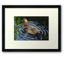 Come on, let me see you shake your tail feather ..... Framed Print