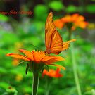 Orange Julia Butterfly by Catherine Sherman