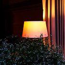 Cosy light. II by Bluesrose