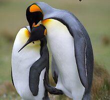 Penguins by leksele
