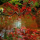Butchart Gardens 17 by James Birkbeck